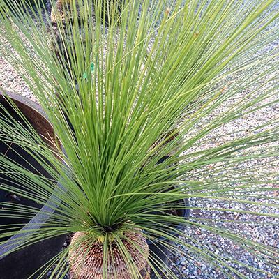 Plant Grasses/Trees